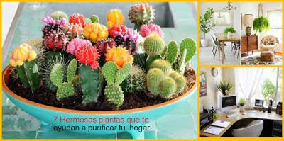 plantas-purificar-hogar
