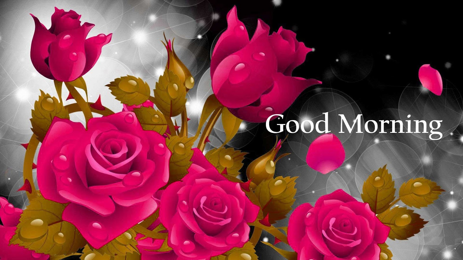 Good Morning Roses Download : Sweet good morning images for whatsapp free download