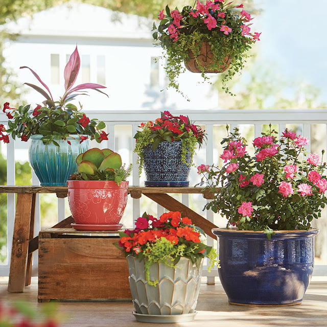 Container gardening ideas for flowers