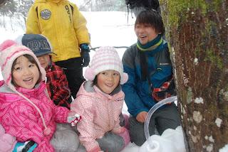 イタヤカエデの樹液採取!大網保育園・つるおか森の保育研究会