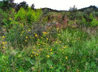 greenery in the fields of Connemara