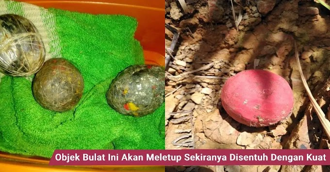 Jangan sentuh jika jumpa objek bulat ini ditemui di hutan, hubungi pihak berkuasa