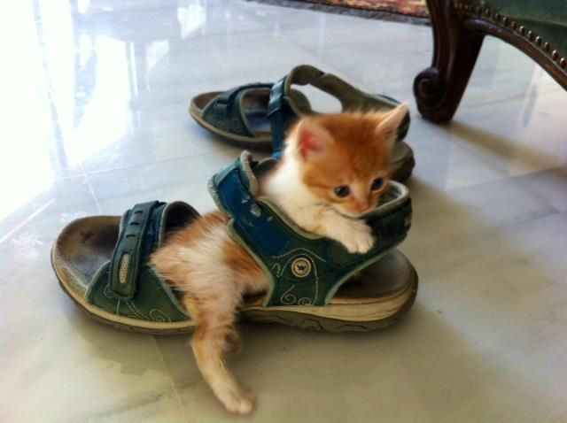 Picture Collection: Cute Animal Funny Pics