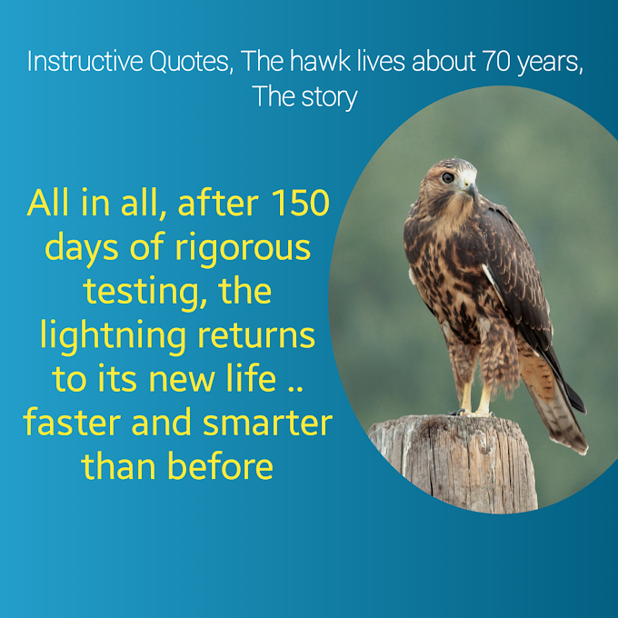 Instructive Quotes, The hawk lives about 70 years, The story