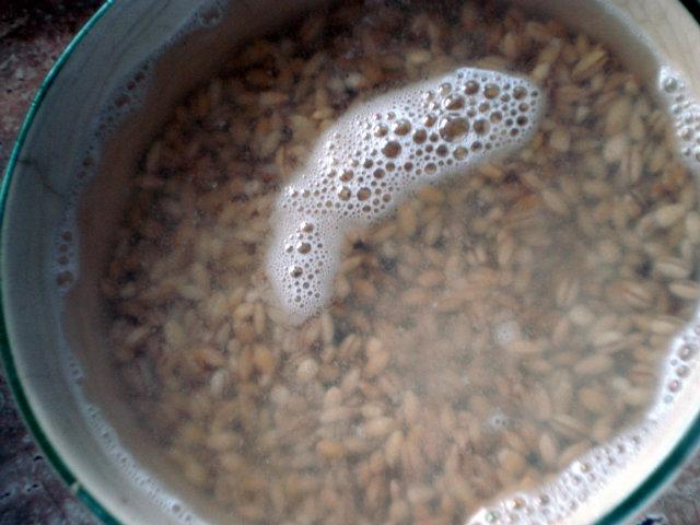 soaking pearl barley