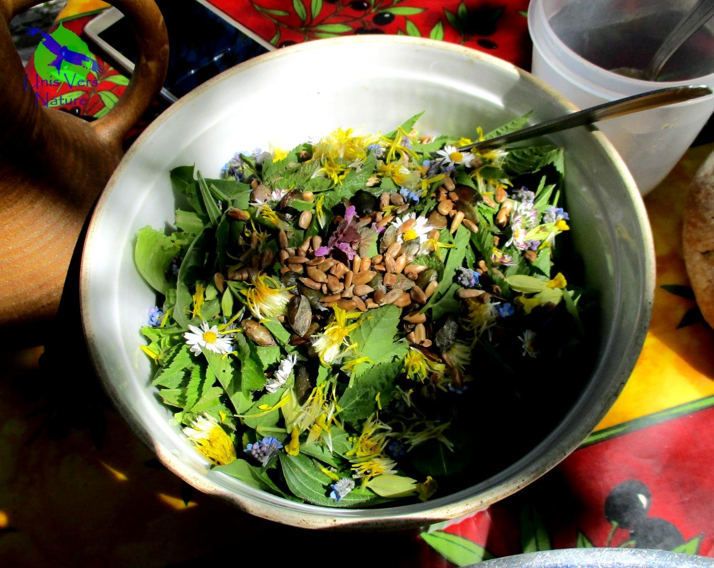 Unis vers nature stages plantes sauvages - Cuisine plantes sauvages ...