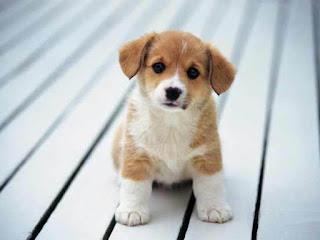 خلفيات كلاب وانواع مختلفة من الدوج 1