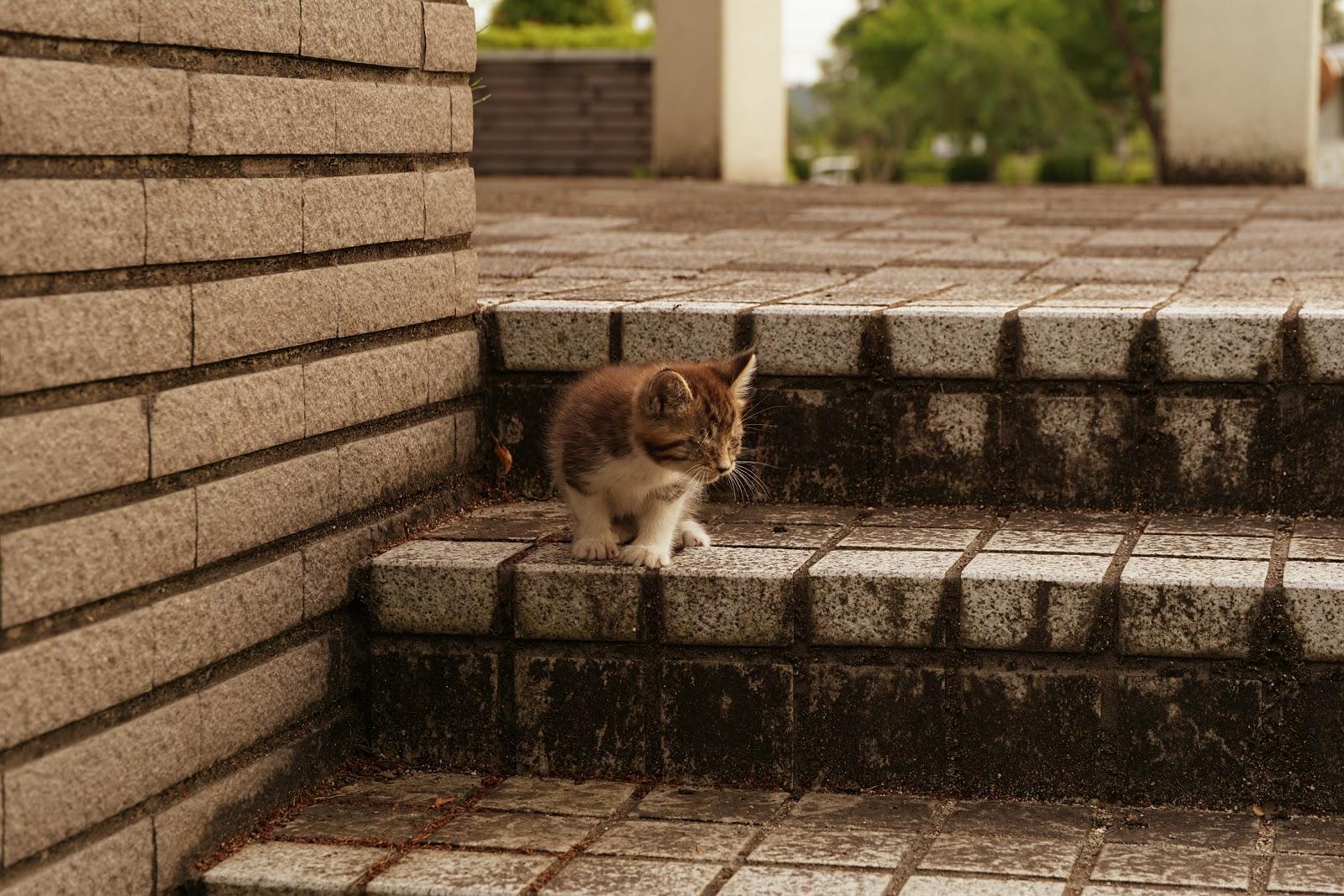 公園の階段の上の方に座った子猫が降りようと下の方へ様子を見ている