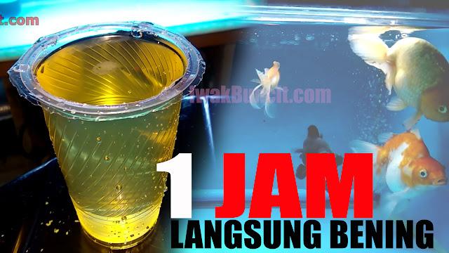 1 Jam Langsung Bening Tanpa Lampu UV? Review BADUN Magic Purifying di Aquarium Ikan Mas Koki