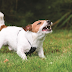 Γιατί ο σκύλος δαγκώνει και τι μπορώ να κάνω;