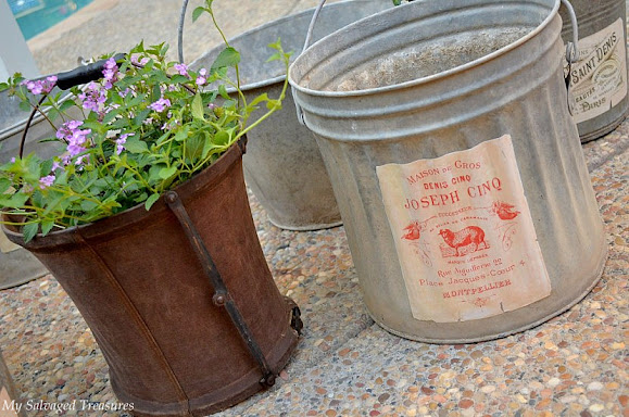 galvanized bucket planters