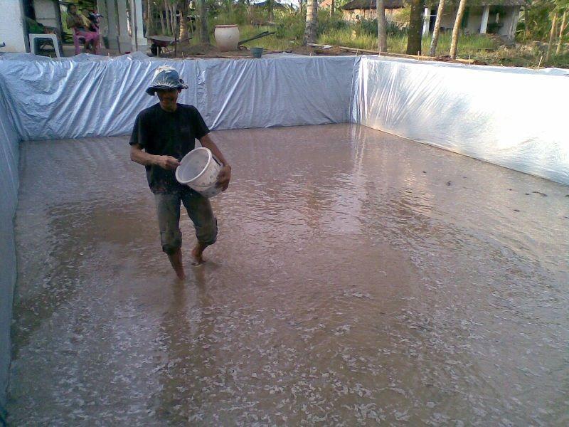 cara membuat kolam beton ikan nila