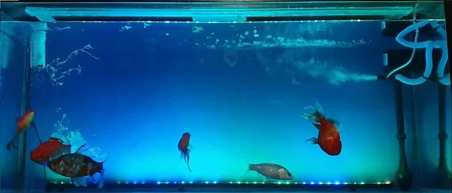 How to install powerhead in aquarium
