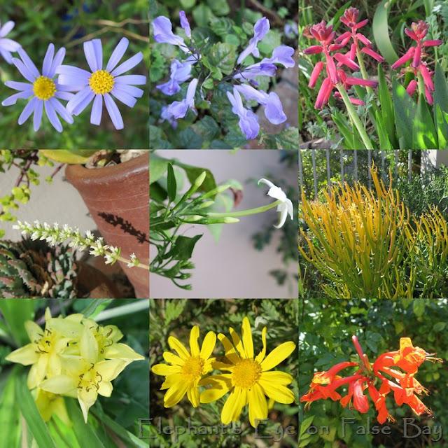 May garden flowers
