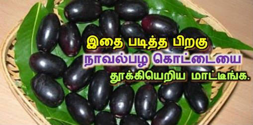 நாவல்பழ கொட்டை, jamun fruit seeds health benefits, naval palam, naval pazham kottai, nanmaigal, maruthuva palangal, natural foods in tamil