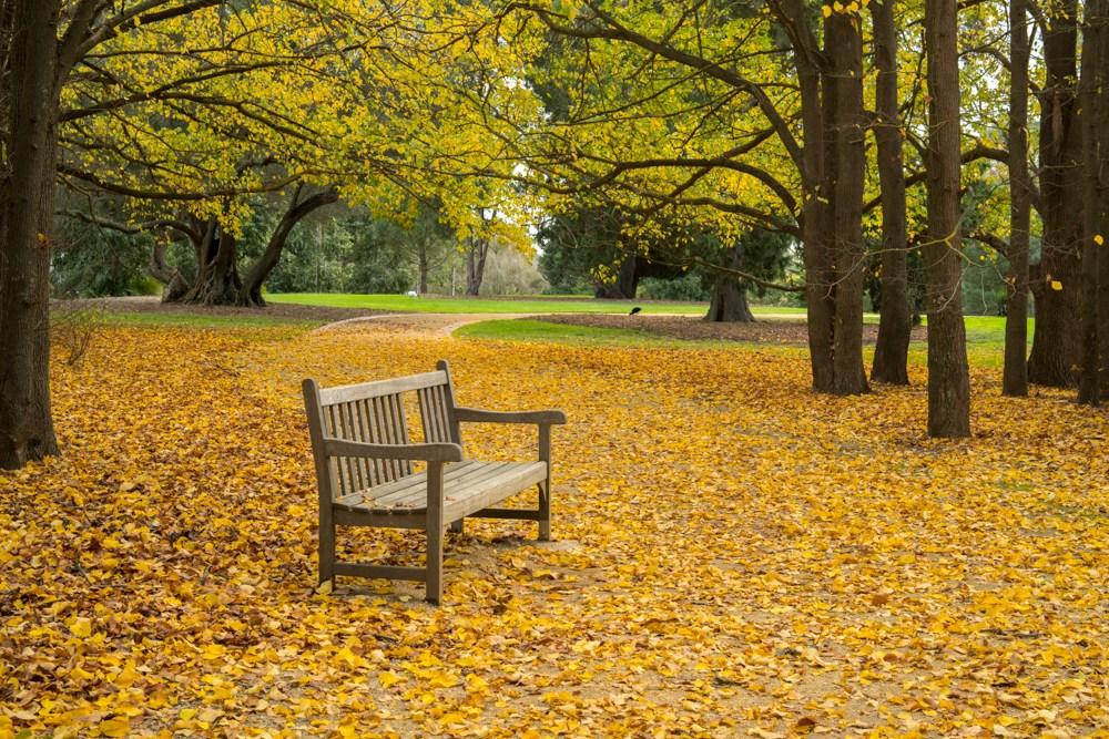 Скамейка в парке. Кадр сделан на объектив Samyang AF 35mm f/2.8 FE