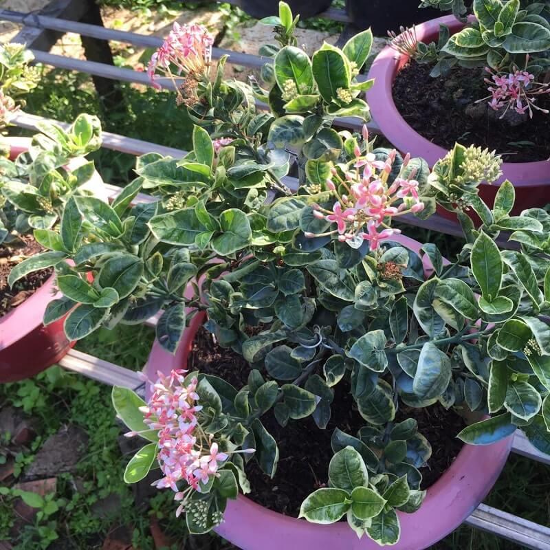 Các loại hoa tại Làng Hoa Sa Đéc 1