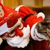 Χριστούγεννα σε ένα καφέ με γάτες στην Κορέα