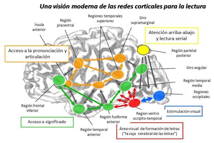 percepción musical y funciones cognitivas alcances Sound and music share a lot, but they are not totalitarian synonyms  su percepción y ejecución involucran a diversas funciones cognitivas si bien el .