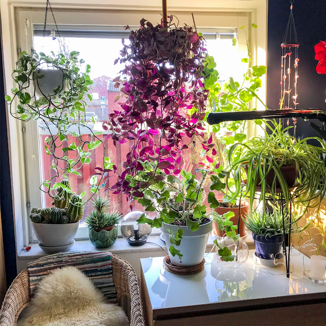 bedroomwindow, krukväxter, plants