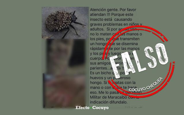 ¿Hay un insecto que está infectando manos y pies con hongos? #CocuyoChequea
