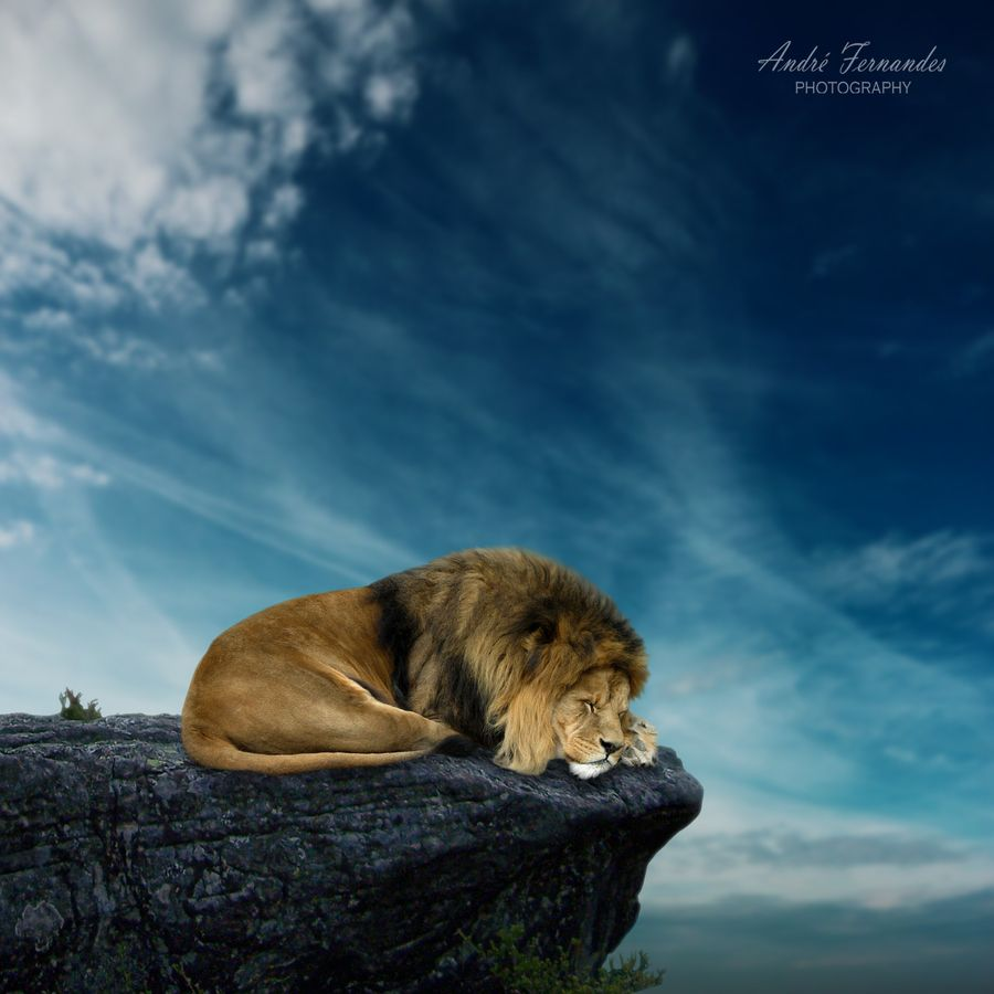 5. The Lion King by André Fernandes