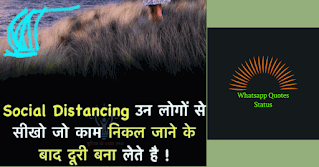 whatsapp dp quoteslove,whatsapp dp quotes in hindi