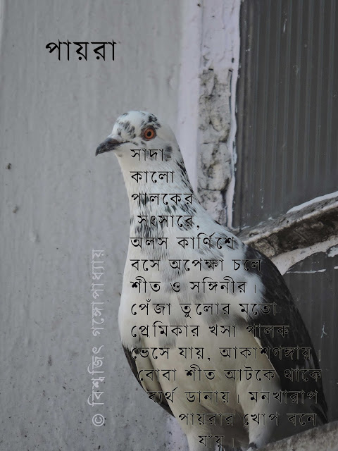 bengali poem: pegion