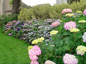 Ternyata Tanaman Bunga dan Daun Ini Berguna Untuk Obat Alami Loh!