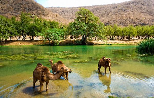 δάσος του Ομάν σε μια έρημο που ανθίζει μόνο για τρεις μήνες τον χρόνο