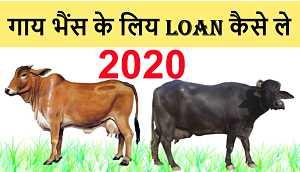 Dairy Entrepreneur Development Scheme Loan Apply Online Eligibility Amount