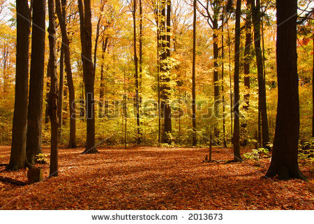 Puppies And Fall Wallpaper Funny Pictures Gallery Fall Forest Background Fall