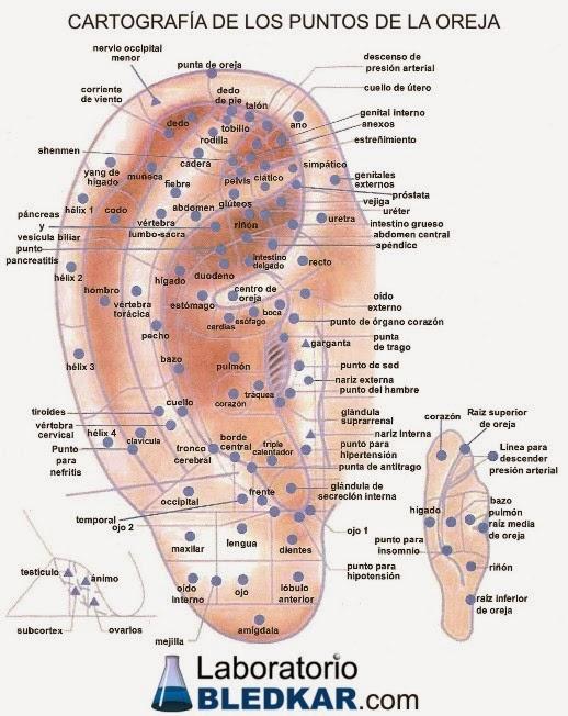 auriculoterapia para afinarse pdf free