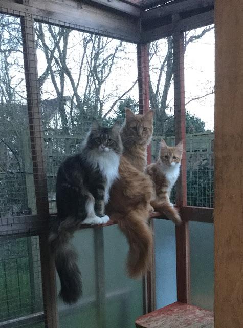 plannerholic-confessions-cats-jo