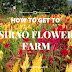 How To Get To The Celosia Flower Farms in Sirao