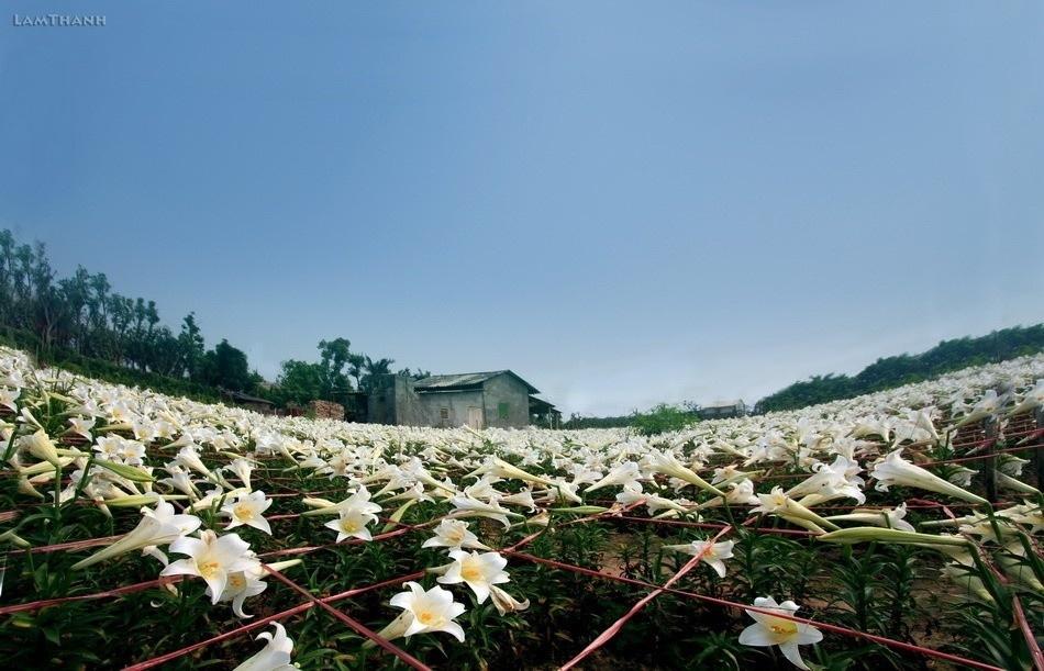 Các loài hoa ở Hà Nội nở vào tháng 4