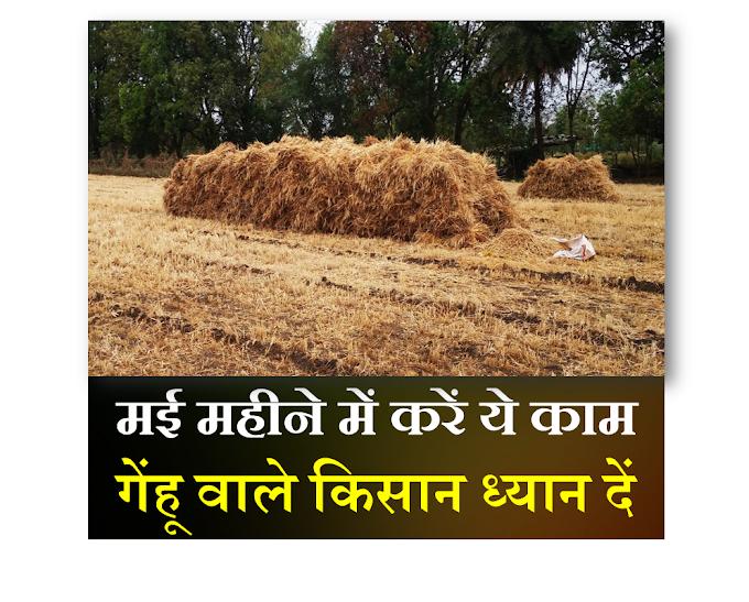 मई महीने में करें ये काम गेंहू वाले किसान क्या करें क्या न करें,may vegetables-Smart Business Plus
