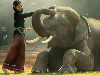 Gakah-gajah