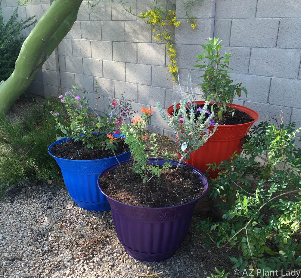 Easy Garden Project Create a Hummingbird Haven in a Container