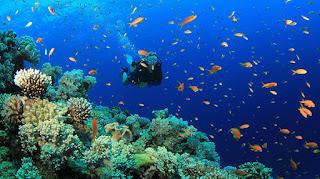 beautifull diving in bali