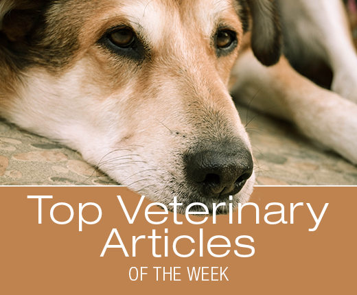 Top Veterinary Articles of the Week: CPR, Clean Label Project, and more ...