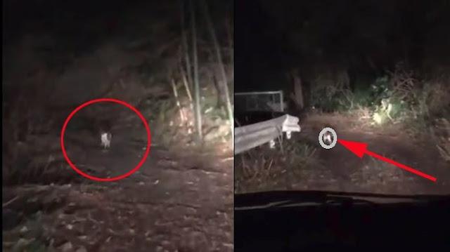 Viral! Aneh Tapi Nyata, Makhluk Ini Tuntun 2 Pria Yang Sedang Tersesat di Hutan Temukan Jalan Keluar