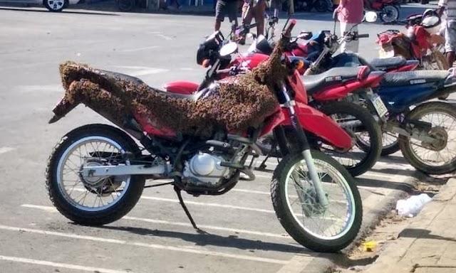 Abelhas alojadas em moto assustam motociclistas na cidade de Xique-Xique