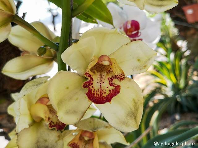 Orchids on Trees IV