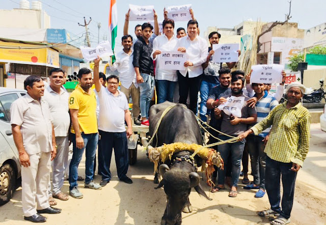 Youth Congress sat on the buffalo buggy on increasing the cost of petrol, protesting against the central government
