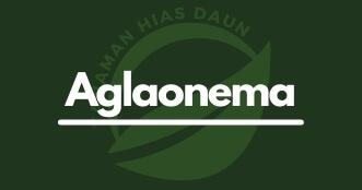 Jenis-Aglaonema