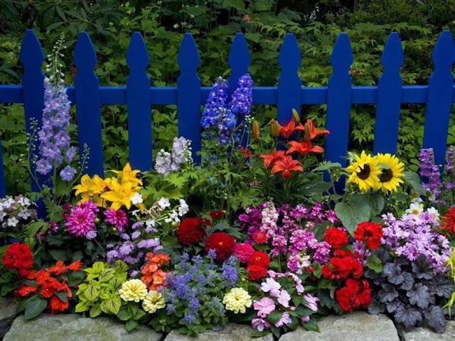 Tips Memulai Taman Bunga Rumah
