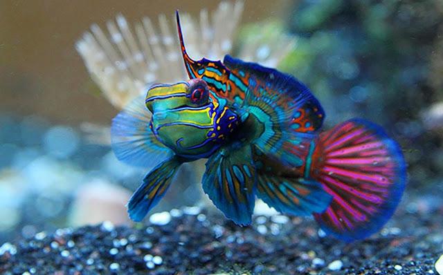 Kepribadian Dari Ikan Untuk pribadimu