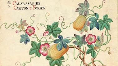 74 dibujos botánicos de las colecciones asiáticas del Real Jardín Botánico en 'Entre Manila y Cantón'