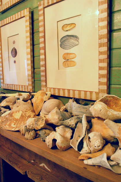 Shell Display on Mantel
